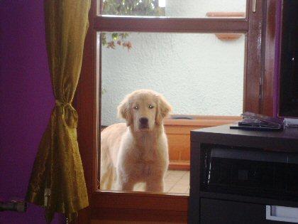 il giardino: croce o delizia del nostro cane?