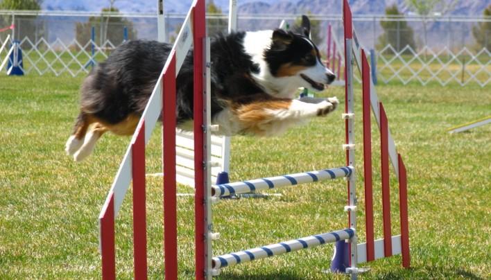 Attività sportive, mostre canine,… tutto con misura!