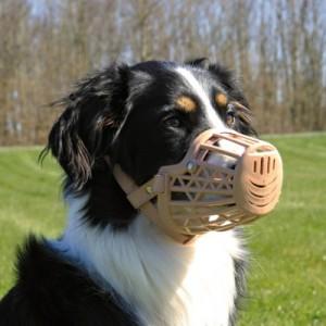 Insegnare al proprio cane a indossare la museruola