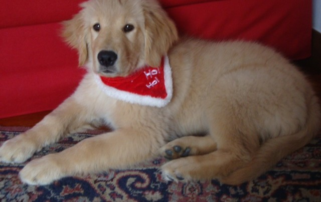 A Natale NON regalare un cucciolo