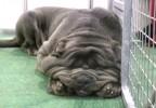 Taglia grande o piccola, sono sempre cani!