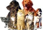 cane socievole o cane socializzato?