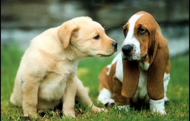 Un cane un grosso impegno, due cani due grossi impegni
