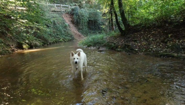 I cani e l'acqua